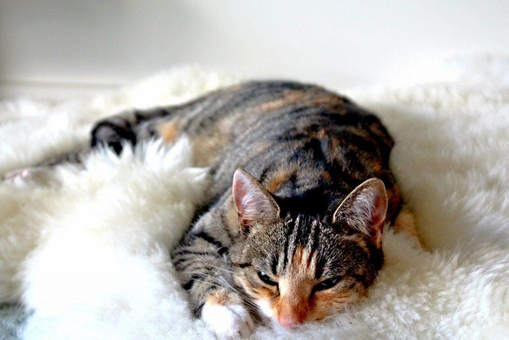 adorable-animal-asleep-266784